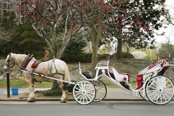 ouat carriage ride