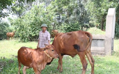 Slow Birthing Cow Brings Unexpected Profit
