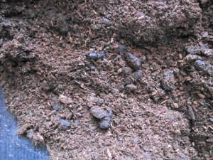 カブトムシの幼虫の糞