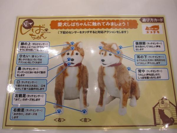 愛犬ロボしばちゃん