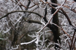 Frosty branches on Tianmen Mountain