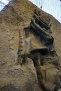 Fossils 1