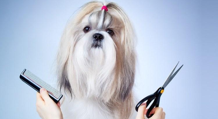 Стрижка собак на дому в Москве недорого