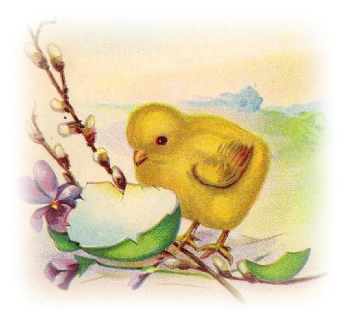 Yellow baby chick with broken Easter egg shell