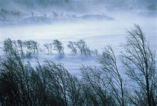 Image result for winter winds are blowing