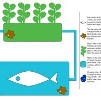 Nieuwe Tuinbouw - Aquaponics