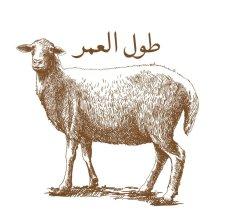 Aqa Moula Tul ul umur Sheep