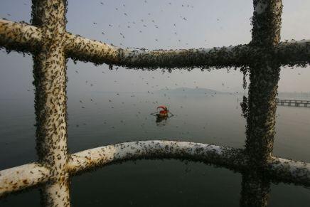 East Lake, Wuhan