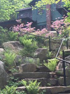 Environmental observations driving landscape design