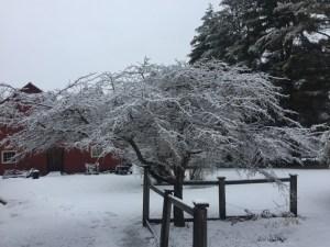 2016 Winter Neighborhood Landscape - Stowe, Vermont