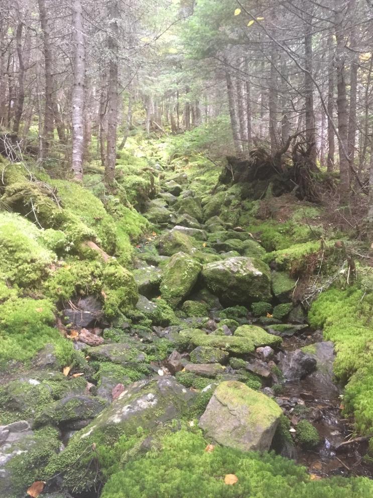 2017 Pine Link Trail Maintenance - White Mountains, NH.