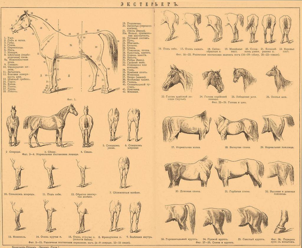 Equine Science 1