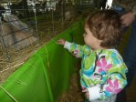 Milly Dotsey at the 2010 Cape Fear Fair and Expo with a rabbit