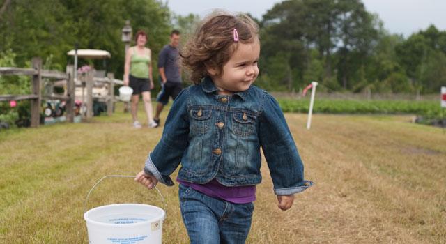 Lewis Farm 2011