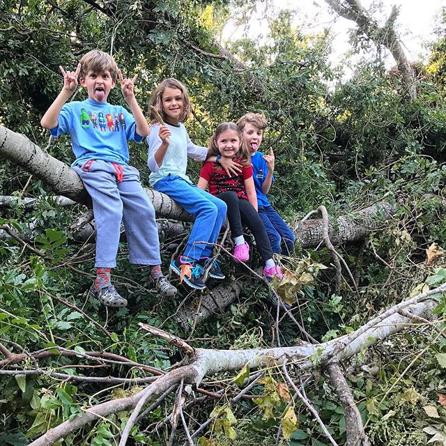 Milly, the Swains and the Yard Debris