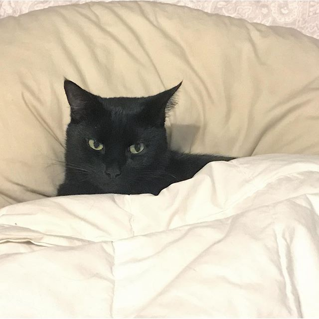 Magic Tucked Himself into Bed