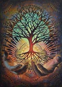 Medis - giminė