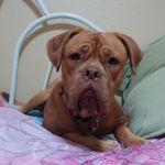 Zachs quality dog foog