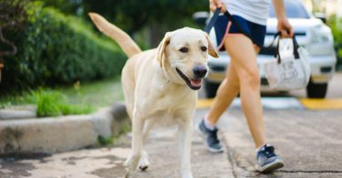 Walking With Your Dog Helps To Improve Your Health