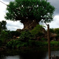 Tree of Life from the landing