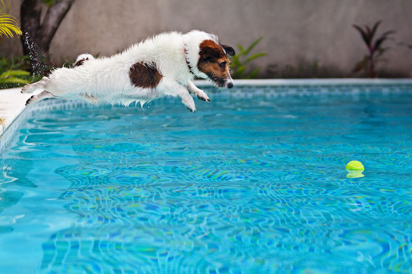 Pool Safety Tips for Dogs - Zagers Pool and Spa