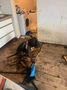 Wrocław. By ukarać partnerkę polewał psa domestosem