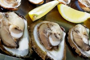 Mali Ston Oysters Croatia