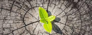 Résilience plante