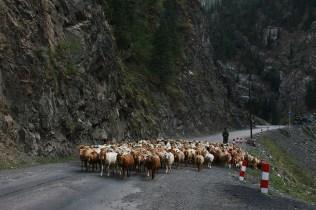 Heavy Traffic in the Tian Shan