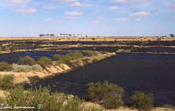 Production huile Sfax
