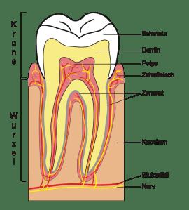 Zahnschmelzaufbau