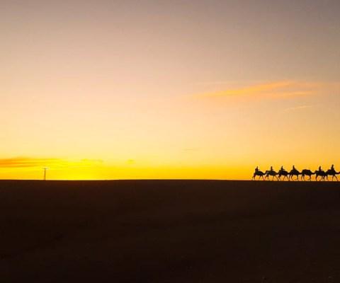Camel Trekking Merzouga