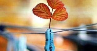 بطاقات الصباح والمساء - لا توجد في البيوت طاقة سلبية، وطاقة إيجابية