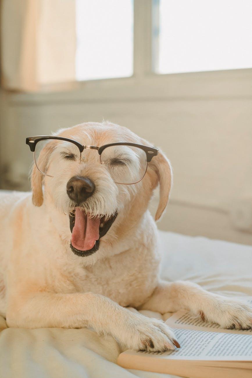 cute dog wearing eyeglasses