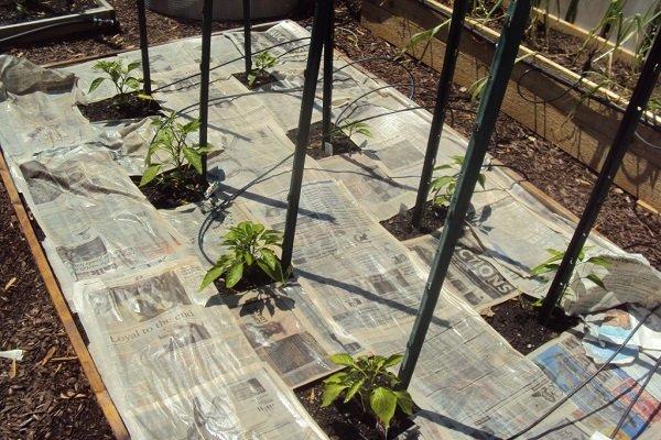 В моя дом картонът и хартията отиват за мулч в… градината