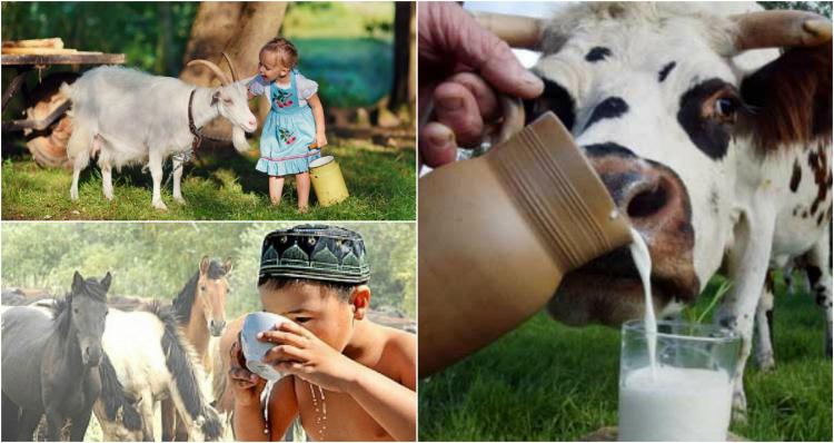 полезните свойства на млякото