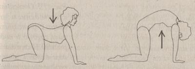 котешки гръб