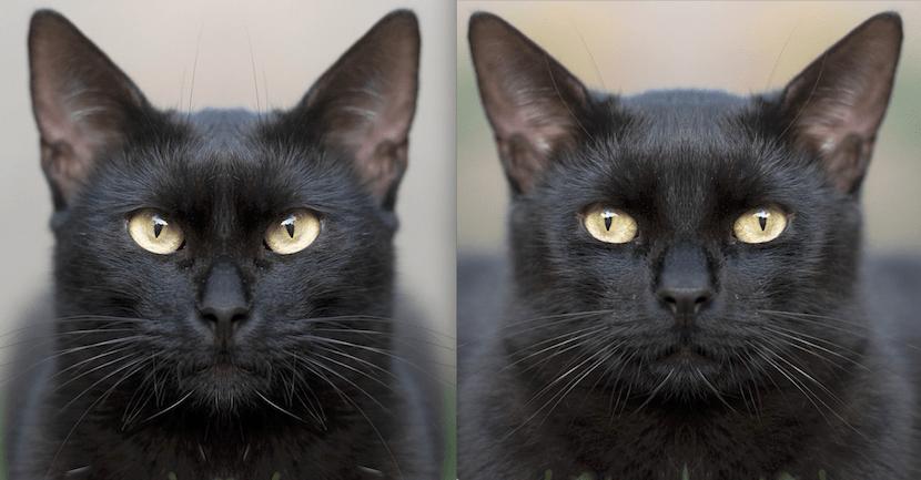 猫の写真ミラーを左右並べたもの