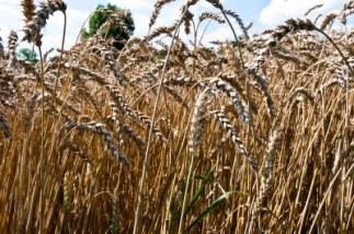 sprzedaż udziałów nieruchomość rolna