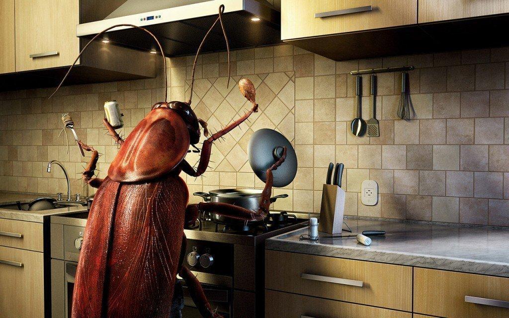 Почему появились тараканы примета