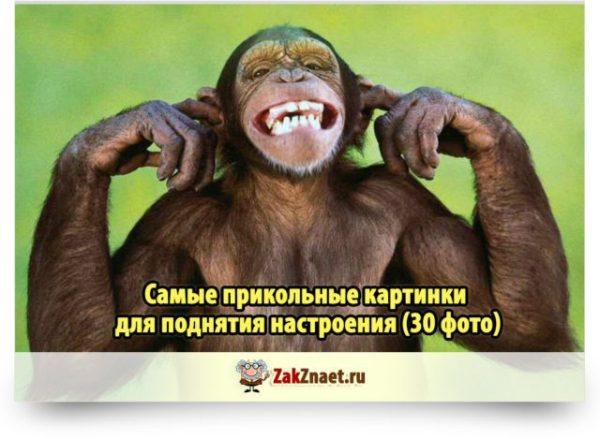 Самые прикольные картинки для поднятия настроения (30 фото)