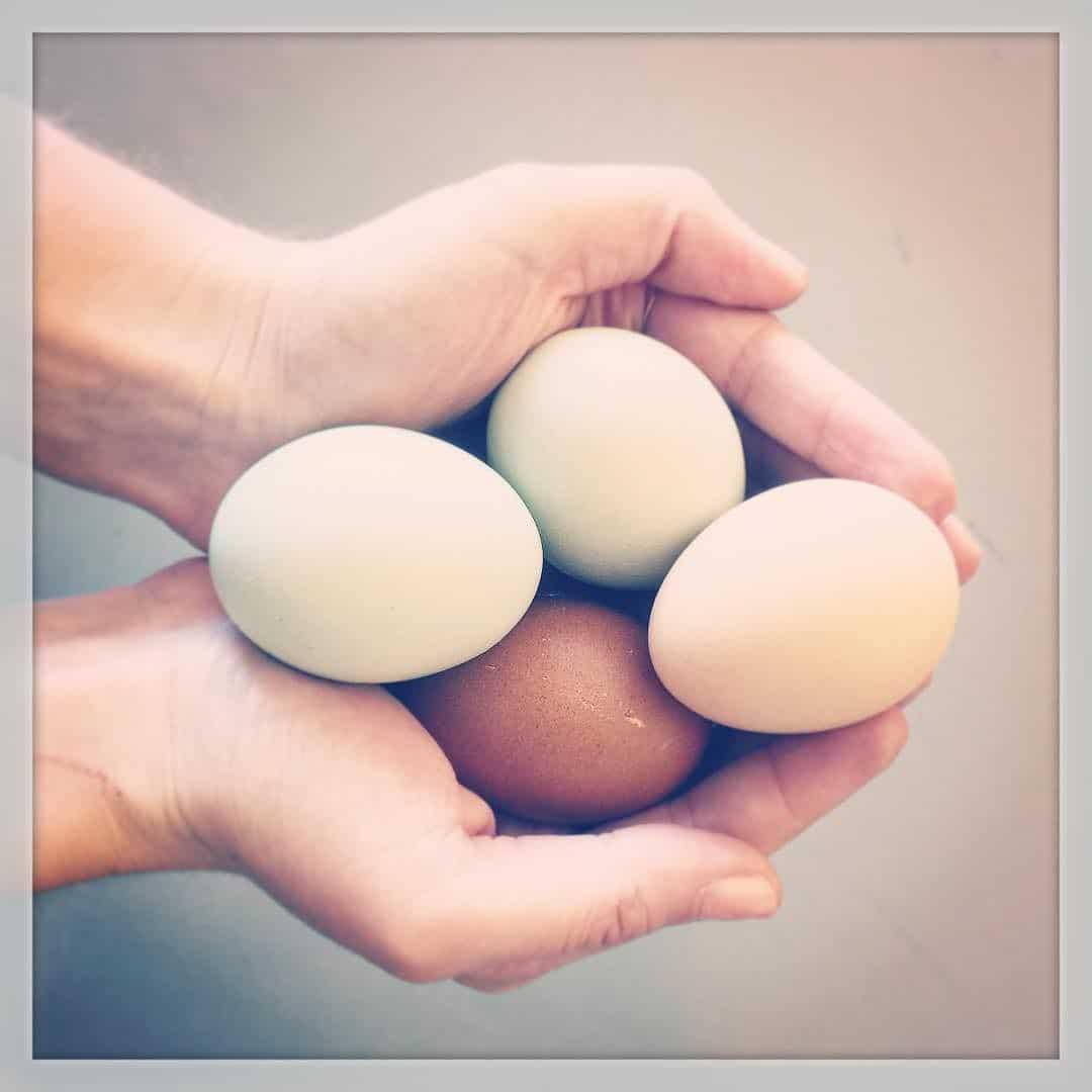Farm Fresh Nyc Eggs