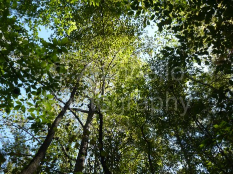 trees, sunlight, sky, leaves, woods, forest