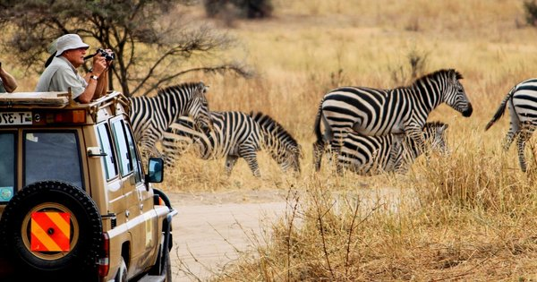 Experience the Beauty of Wildlife with Zambia