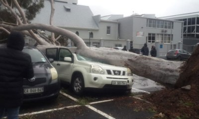 Storm digs up trees in Cape Town