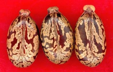 seeds-4454_1280