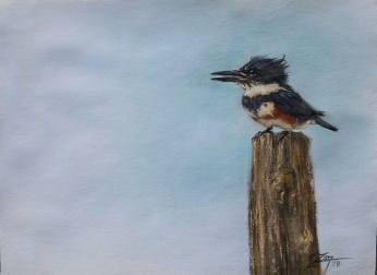 Belted Kingfisher 9x12 Pastel © Zan Savage - All images are copyright © Zan Savage. Copying, altering, printing or redistribution of any images without written permission from the Artist is strictly prohibited.