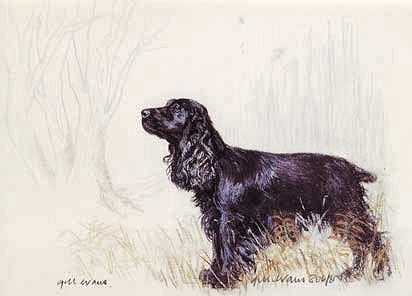 Black Cocker Spaniel Ge