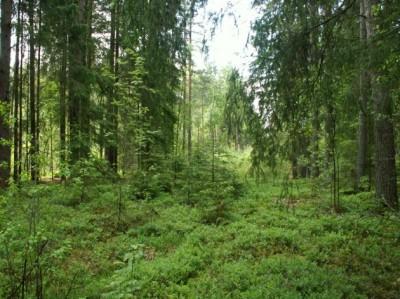 Forest-tour-400x299