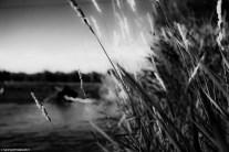 river side grass